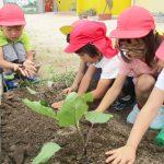 植物の生長観察